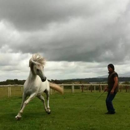 Horse Jan